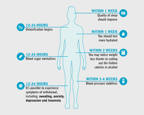 infographic with body and what happens with less alcohol
