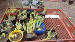 Thumb gardening2